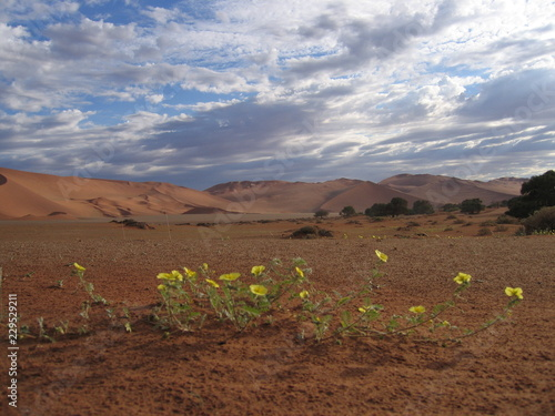 Tuinposter Diepbruine Plante 9