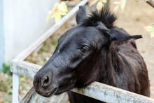 Black Donkey Asks For Food