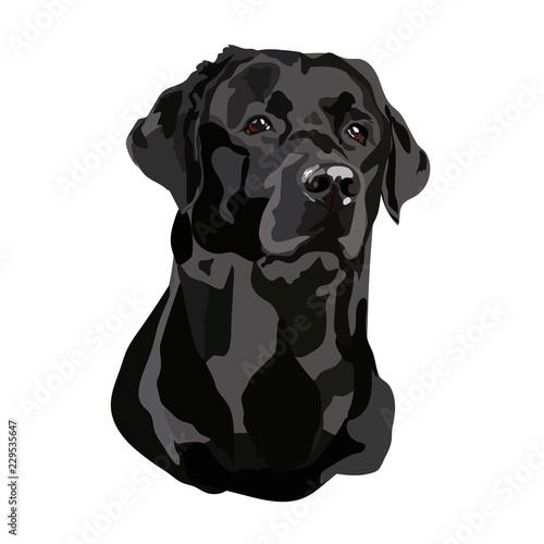 Head Black Labrador Vector Tableau sur Toile