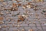 Fototapeta Fototapety do łazienki - Żołędzie i liście jesienia
