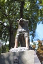 Hachiko Estátua Cachorro Japan