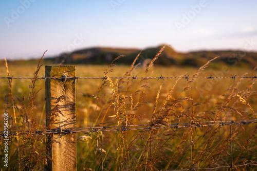 Fotografie, Obraz Farmer's Field Behind Fence at Sunset, Iona, Scotland, UK