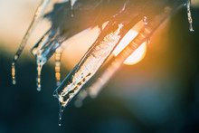 Transparent Ice Icicles On The Background Of The Sunset.
