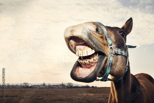 Funny portrait of smiling horse with teeth with copy space Wallpaper Mural