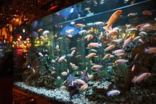 Large Aquarium With Colorful F...