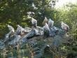 Vautours fauves au parc animalier de Sainte-Croix en Moselle. France