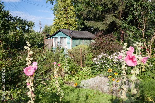 wooden hut in the allotment garden during the summertime Canvas Print