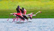 Galloping Flamingos - A Small ...