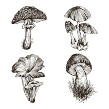 Collection Of Highly Detailed Hand Drawn Mushrooms Isolated On White Background. Edible Mushrooms Penny Bun And Chanterelles. Poisonous Mushrooms Death Cap And Fly Agaric. Vector Design