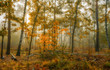 walk in the autumn forest. fog. autumn colors. melancholy.