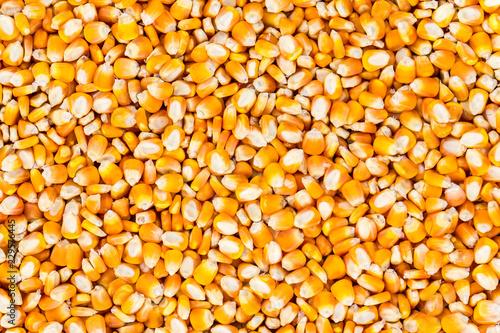 Fotografia close up of corn seeds background