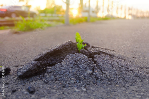 Photo  Small and green plant grows through urban asphalt ground