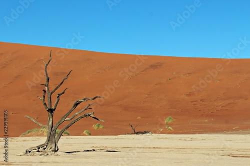 Foto op Canvas Baksteen Baum in der Wüste