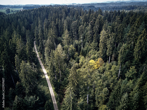 Foto op Canvas Zwart street between large trees from top with drone aerial view, landscape, autumn