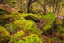 Scotland Autumn