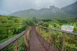 canvas print picture - Kirstenbosch Garden