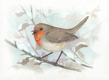 European Robin Winter Bird Wat...