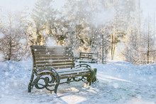 Falling Snow. Pew In City Park. Fairy Winter Scene In Park.