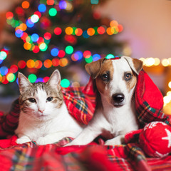 Cat and dog under a christmas tree