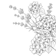Floral Garland Of Lavender And Hydrangea Isolated Over White Background. Spring Bouquet Of Flowers In Line Sketch Style. Vector Illustration