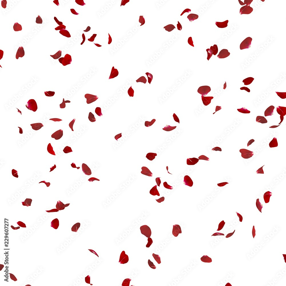 Rose petals fly in the air