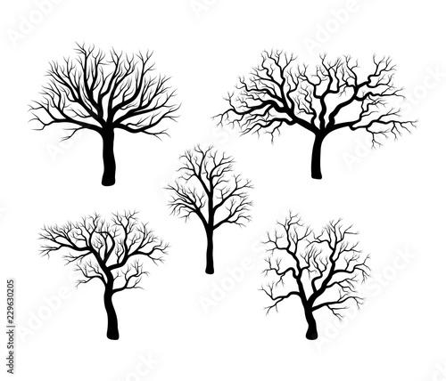 Fotomural bare tree winter set design isolated on white background