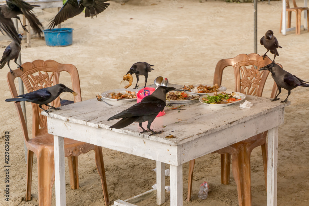 Fototapeta Crows steal food