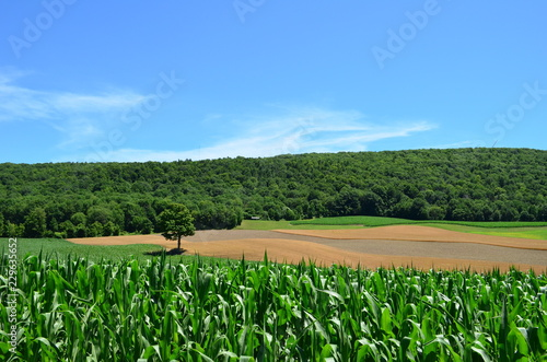Fotografie, Tablou Green and golden farm fields on rolling hills in upstate New York on a beautiful