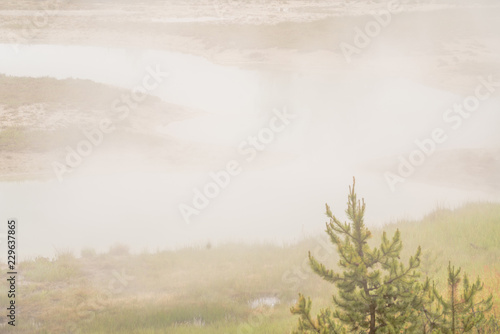 Foto auf Acrylglas Wald im Nebel Yellowstone national park landscape. Geothermal activity, hot thermal springs with boiling water and fumes at Yellowstone National Park, USA