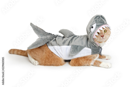 Fotomural Cat Wearing Funny Shark Halloween Costume
