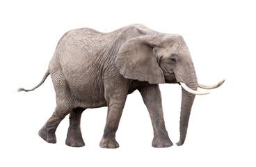 Slon koji hoda izvađen