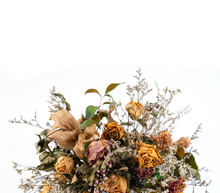 Dried Flowers Isolated