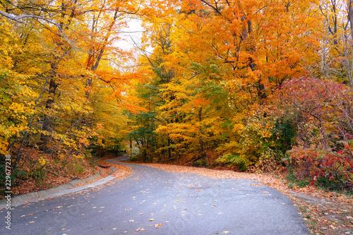 Foto op Canvas Diepbruine Winding autumn road