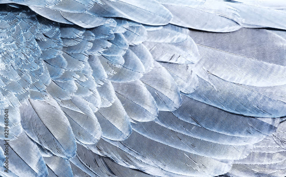 Fragment of parrot wings in silver color for background. Texture of bird feathers