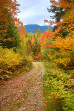 Fall Foliage Along Old Dirt Road In Carrabasset Valley, Maine.