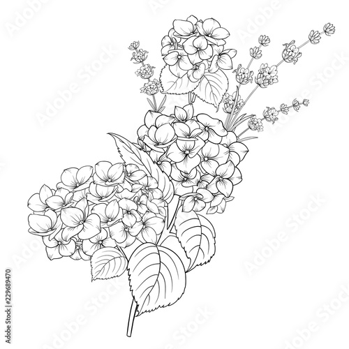 Fotomural Floral design of lavender and hydrangea isolated over white background