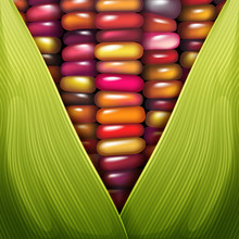 Glass Gem Corn Seed Texture Cl...