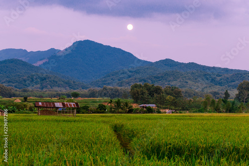Foto op Canvas Purper The foggy mountain background, morning light, paddy rice field, intimate nature wallpaper, beautiful natural scenery, colorful seasonal changes.
