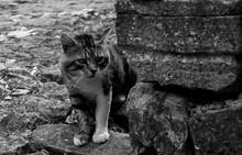 A Street Cat In The Historic Hill Village Of Oprtalj In Istria, Croatia