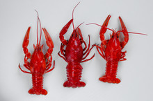 Three Cooked Red Crayfish Or Crawfish On White Background. Food Minimalism Concept