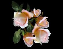 Five Large Light Pink Roses On Black