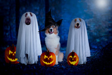Halloween, Three Dogs Sit Disg...