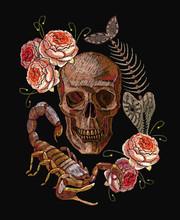 Embroidery Scorpion, Human Sku...