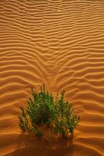 Plant Growing On Desert Landscape