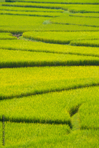 Poster Rijstvelden Green Terraced Rice Field in Nan, Thailand.