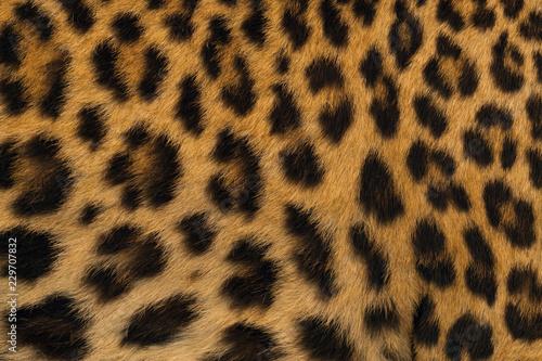 Deurstickers Luipaard Leopard skin pattern for background.