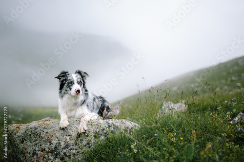 Canvas-taulu beautiful landscape with a dog border collie