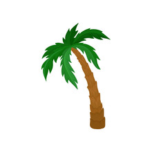 Big Palm Tree With Green Leave...