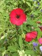 British Wild Flowers in Rural Reserve