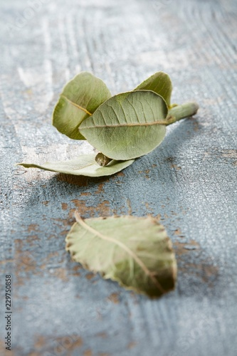 Dried bay leaves on a blue wooden background